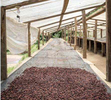Real Chocolate Craft Farmers Chivite Organic